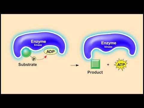 วิชาชีววิทยา - กระบวนการ glycolysis