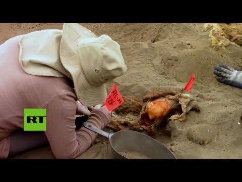 Hallaron esqueletos de 56 niños sacrificados en un antiguo ritual en Perú