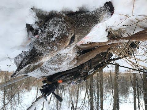 Late Season Deer Hunts, CO Book Review - Michigan Out of Doors TV  #1802