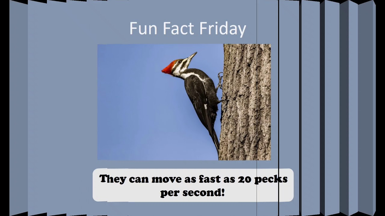 Fast Fact 4/2/21