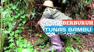 BERBURUH REBUNG BAMBU CINA 😄 || TKW HONGKONG