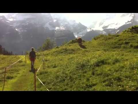Alpine stroll