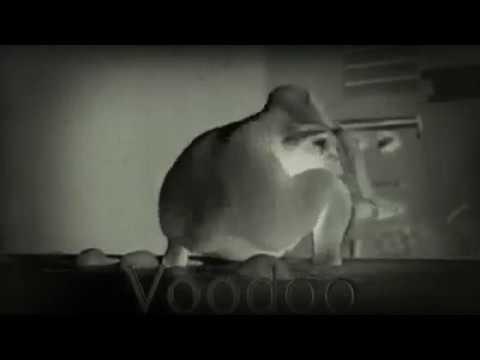 Poulet fantôme qui dance :€ ¡!!!¡