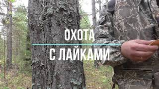 Охота 2020 новое видео. Охота с лайками