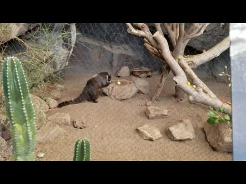 Henry Doorly Zoo and Aquarium - Random Walk Around