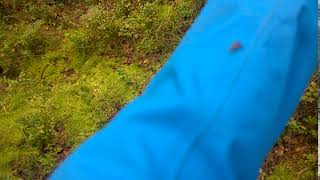 видео Лосиный клещ (оленья кровососка): среда обитания, размножение, опасность для человека