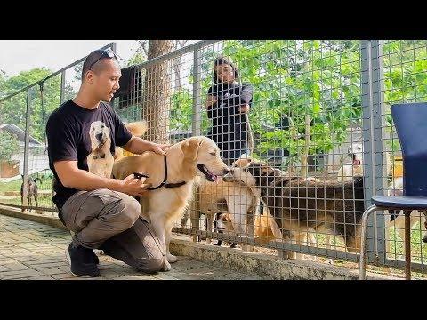 DOGVENTURE episode 6 - INDAHNYA BERBAGI | SHELTER JAAN (JAKARTA ANIMAL AID NETWORK)