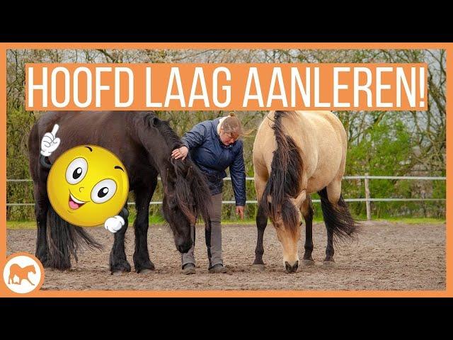 Leer je paard zijn hoofd laag houden