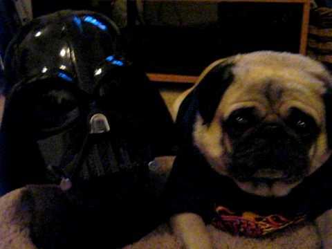 Darth Vader and Leo the Pug