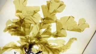 Les Herbiers, cinq siècles de savoirs