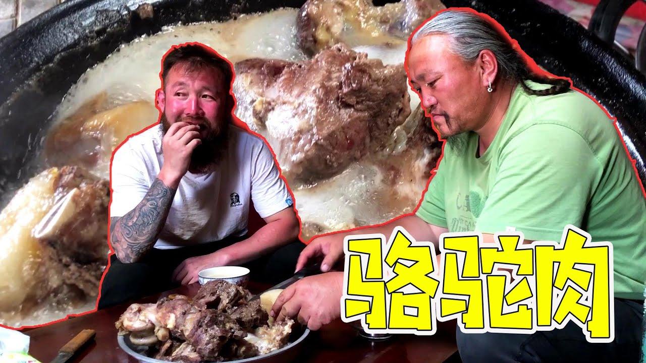 """駱駝肉""""吃大肥子才香?內蒙古純牧區駱駝肉:一口下去滿嘴油 【鬍子王】"""