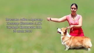 Выставка собак всех пород, г.Армавир.30.06.18
