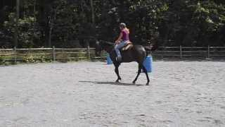 "Tara Jones Pieceful Solutions ERRM riding and training tip with TB ""Bucky"""
