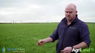 作物观察:黄锈病对冬小麦的影响