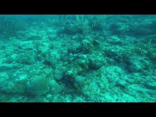 Spear Fishing for Killer Lionfish in Aruba. Many kills here!