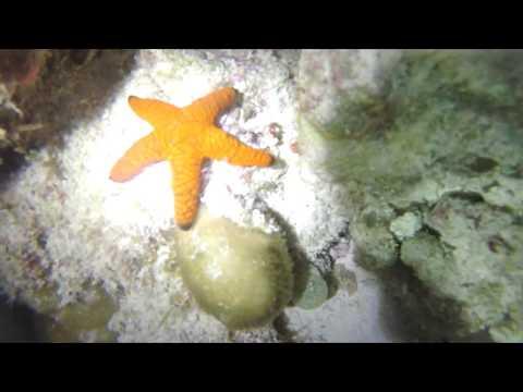 [GoPro] Diving in Maldives  4K 60fps