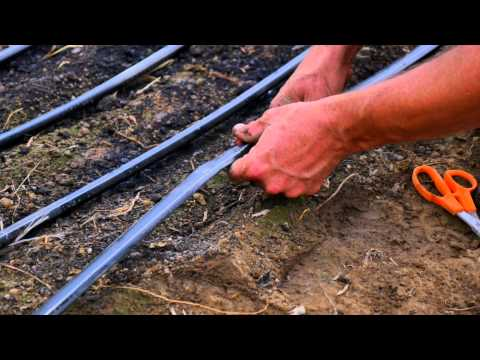 Drip Irrigation Basics for Hoophouse Production