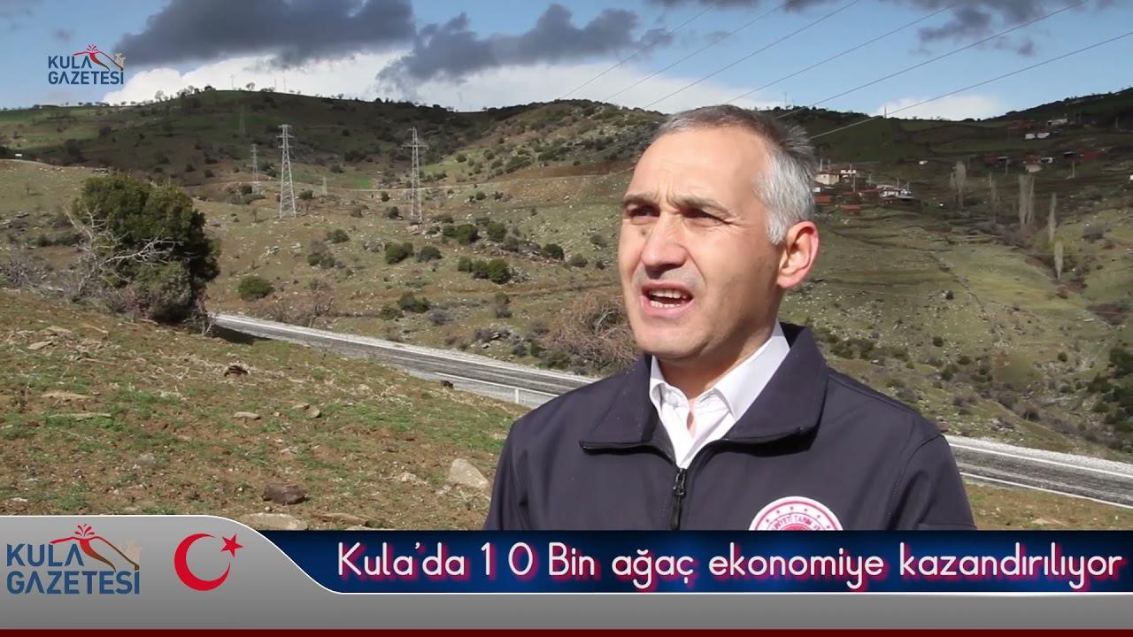 Kula'da 10 Bin ağaç ekonomiye kazandırılıyor