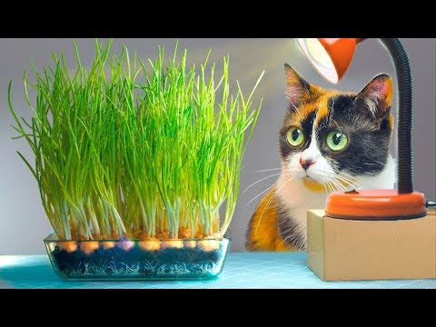 Как выращивать зеленый лук в домашних условиях