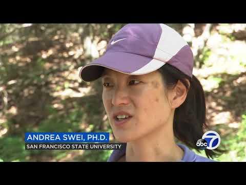 SFSU study predicts rise in ticks this seaso