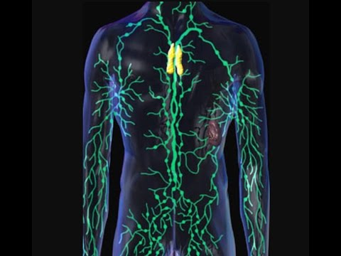 How Rebounding detoxes your Lymphatic System