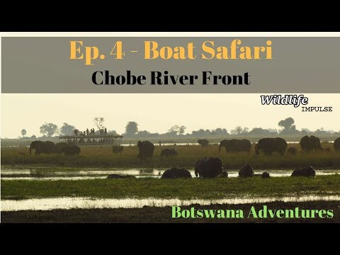 Botswana Adventures: Ep4/5 Boat Safari at Chobe River Front (Chobe National Park - Botswana