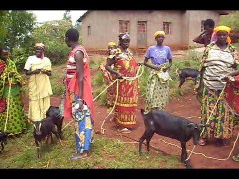 Burundi Ziegenkauf/Buying of goats/Compra de cabras