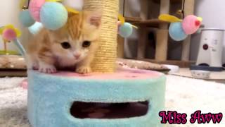 The Sweetest Little Kitten | Too Cute!