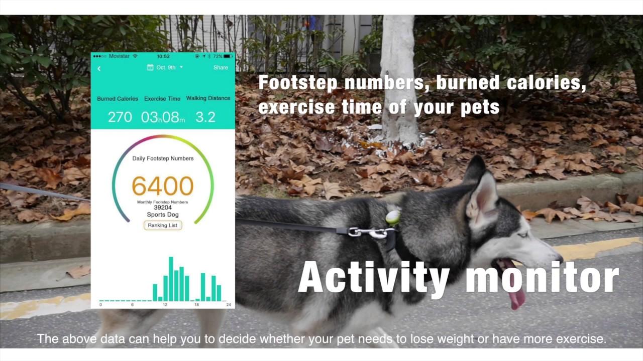 petalways smart pet pendant pet health tracker led dog collar youtube
