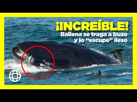 Un buzo se salva milagrosamente tras acabar en la boca de una ballena, que lo escupió ileso
