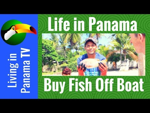 Buying a Fish - Fresh from the boat - In Puerto Armuelles Panama
