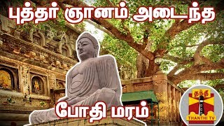 இது தான் புத்தர் ஞானம் அடைந்த போதி மரம்...   Bodhi Tree   Buddha   Thanthi TV