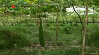 মাটি ও মানুষ(জলবায়ু পরিবর্তন ও পিরামিড প্রযুক্তির উপযুক্ত এলাকা ) Mati o Manus