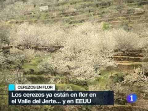 TVE: CEREZOS EN FLOR EN EL JERTE Y WASHINGTON DC