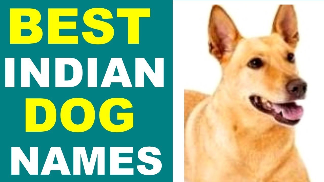 Best Indian Dog Names Dog Names For India You Should Know Youtube