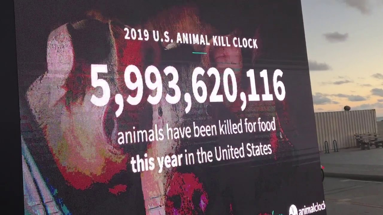 US Animal Kill Clock: 2 Minutes Of Death — The Political Vigilante