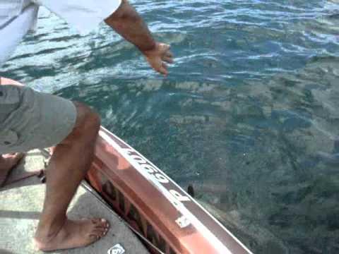 Sport Fishing Lake Arenal Machaca La Fortuna Tirsio Hidalgo.wmv
