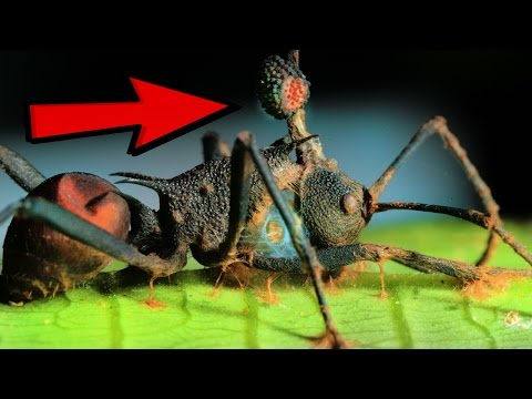 10 Zombie Organisms In Nature