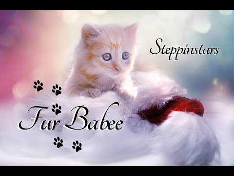 Baby Animals - pets - family - Fur Babee - cute - Steppinstars - kids -  kittens - puppies