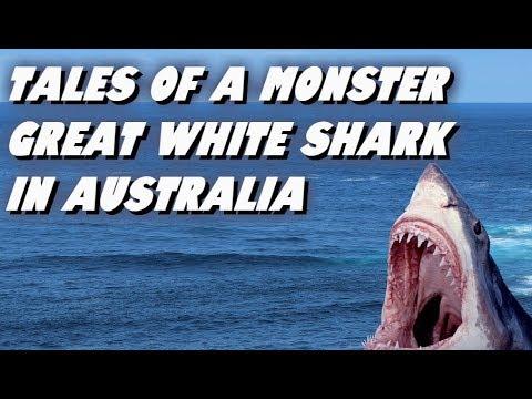 KÖPER LEGENDARY SHARK-GLIDER & LETAR SKATT I FORTNITE ... |Legendary Sharks