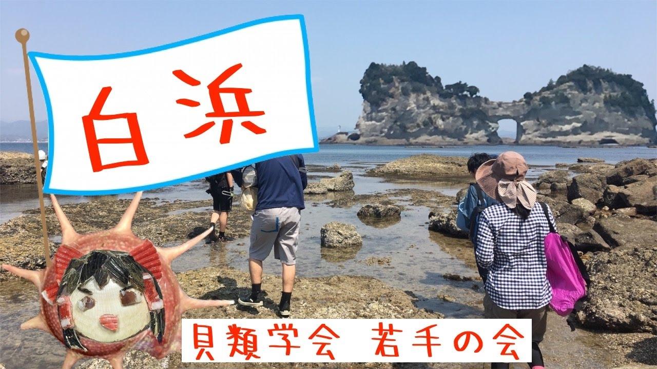 日本貝類學會 若手の會 in 南紀白浜!!! - YouTube
