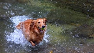 Dog Training - Teaching Your Dog With Confidence And Respect