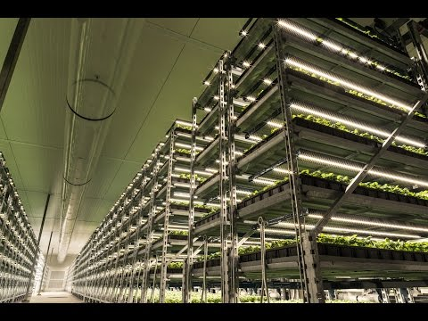Largest Organic Herb Grower in U.S. Transforms with Fluence