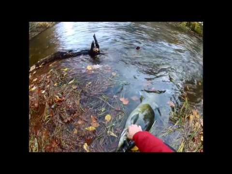 2016 Salmon River  --  Fish and Flies  --  and lots of water