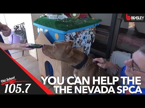 Old School 105.7 visits the Nevada SPCA