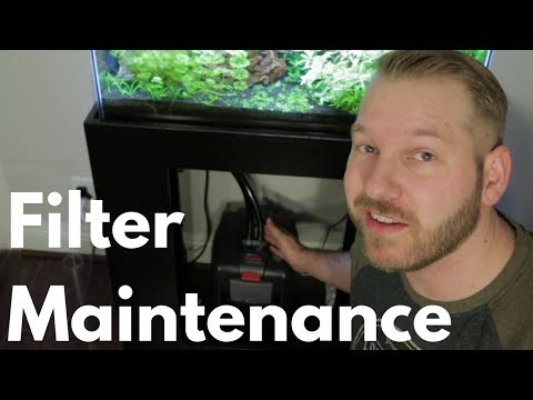 Canister Filter Maintenance: Eheim Professional 4+ 250