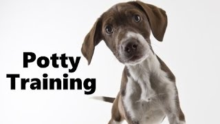 How To Potty Train A German Shorthaired Pointer Puppy - Training German Shorthaired Pointer Puppies