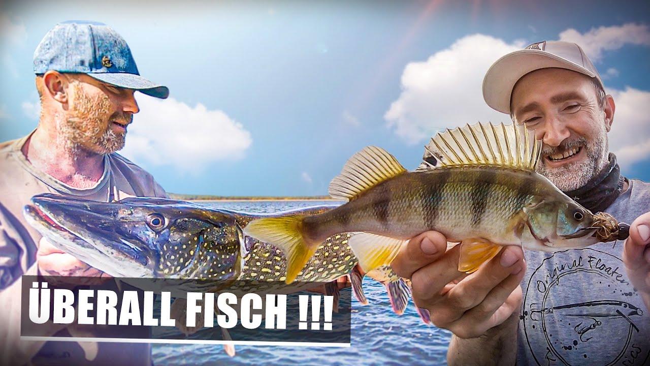 THKFISH 5g Jigk/öpfe Angeln Jighaken f/ür Barsch und Forellen