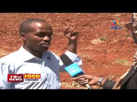 Food Friday: Kirinyaga farmers' project to proof their ecosystem and earn carbon credits