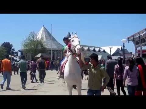 horse riding in mall road shimla
